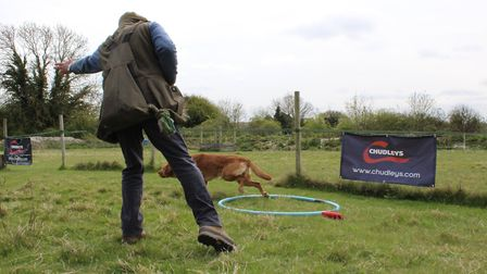 Split retrieves and distraction dummies are the beginnings of teaching a dog to focus on the dummy y