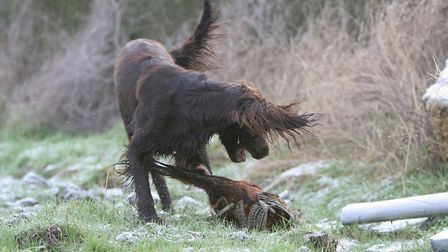 Ensure you have put in the training time before you take your dog into the field