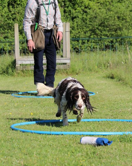 Try rolling a tennis ball past the dog when it is returning with a retrieve