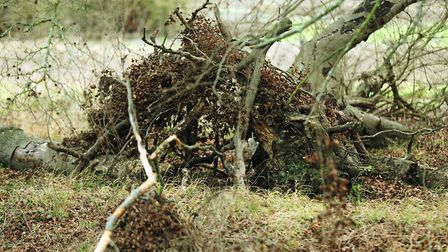 The hide was still working almost a decade after I built it until a storm brought down the nearby s