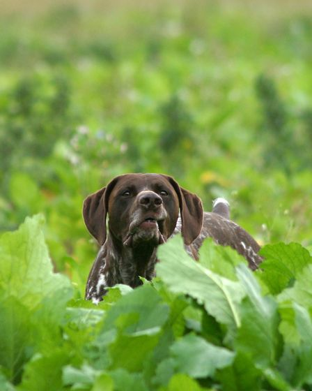 Think about how your dog sees and smells things from their level