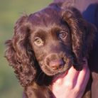 Bonding with your puppy is more about being consistent and clear with them, says Ryan