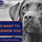 Are you looking for sponsorship for your dog? Alpha is on the hunt for dog/handler partnerships to a