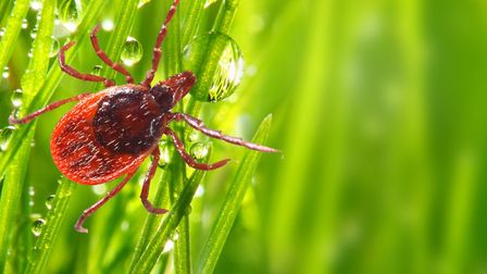 Lyme diease is difficult to diagnose and if left untreated causes an extremely unpleasant illness...