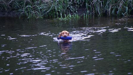 Teach the dog that swimming across to the other bank will be productive