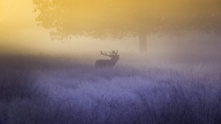 A red stag in the morning mist! Surely something we need to cherish and not simply eradicate from th