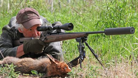 Ambushing foxes with the 783 off the bipods with the really comfortable Form stock mean shots out be