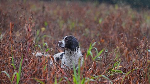 Being able to stop a dog at distance is crucial in the field