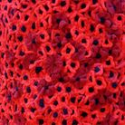 Lympsham's Women's Institute have knitted more than 1000 poppies as part of a Remembrance Day displa