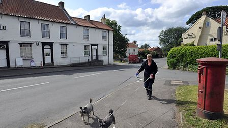 Exercising the dogs along York Road, Green Hammerton.