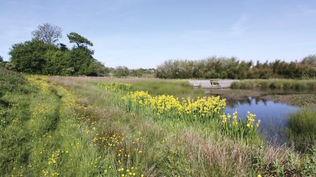 The ponds and viewing platforms of the Wildlife Trusts Filey Dams reserve are a great place to get c