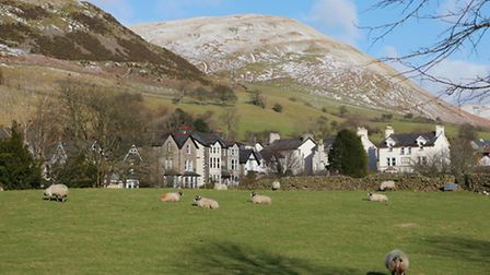 Sheep in Sedbergh
