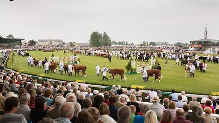 The Grand Parade of Cattle in the main ring