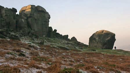 Cow and calf, Ilkley