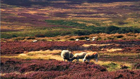 Goathland Moor by John Holtby