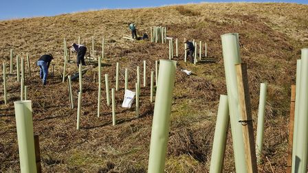 Wooden stakes and soft green tubes house some very small, very precious saplings that are going to h