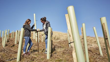 The planting includes native British species such as willow, alder, holly, blackthorn, hawthorn and