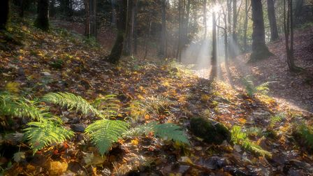 Inspiration Landscape photographer and one of our judges, John Potter, took this lovely woodland ph