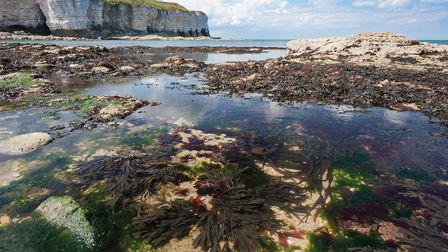 A brand new underwater world is uncovered at each tide on the chalky shores of Flamborough (George S