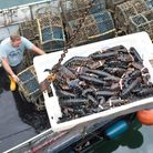 There are about 30 lobster boats in Scarborough bringing in huge numbers of the clawed beasties ever