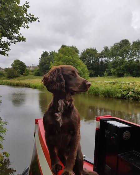 Merlin, none the worse for his dip in the Leeds and Liverpool Canal