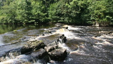 Redmire Force, not quite as spectacular as its more famous neighbours at Aysgarth, but more peaceful