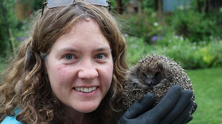 Hedgehog rescuer Emma Farley welcomes a new guest to her York garden