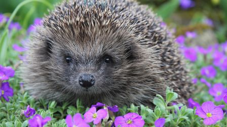 Emma ensures her wildlife garden is full of animal-friendly plants and features to attract prickly v