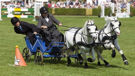 The scurrying class is a firm favourite with families (well, who doesn't love a teeny-tiny horse?)