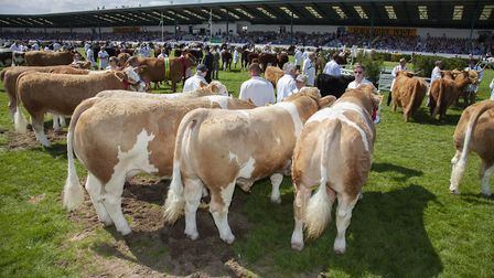 The Grand Cattle Parade fills the main ring every year (no, really, these beasties fill it)
