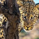 African Pride's 'Kruger Under Canvas' experience will get you very close to wildlife. Visit african-