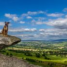Dog enoying the sunshine perched on a ledge in Yorkshire Dales (c) Rebecca Cole / Alamy Stock Photo