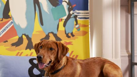 It's a very posh dog's life at the new Bike & Boot hotel in Scarborough