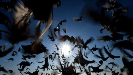 500 racing pigeons set off from Whitley Bay as they take part in a race ending in Nottingham