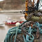 Live lobster in Staithes harbour