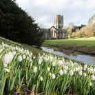 Fountains Abbey with snowdrops in winter - Jonathan Pow