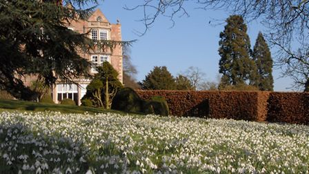 Snowdrops at Goldsbrough Hall, Knaresborough