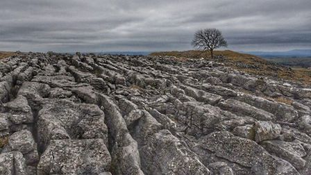 The Lone Tree, Malham by Martyn Wright