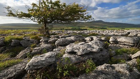 The limestone pavement in the Yorkshire Dales