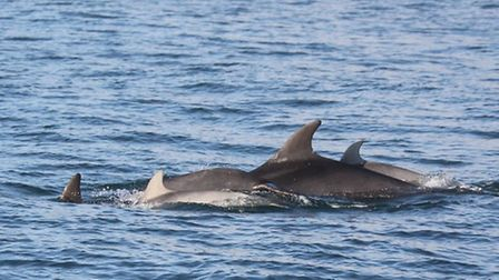 Occasional visits from bottlenose dolphins provide another reason to head to the Yorkshire coast thi