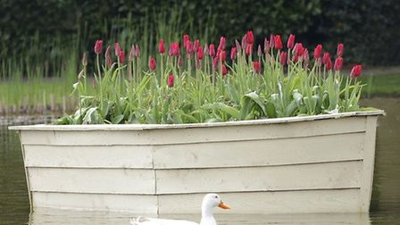 A boat full of tulips in the Upper Lake at Burnby Hall, Pocklington by Gordon Ratcliffe