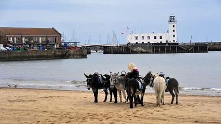 Donkeys at Scarborough by Haydn Greenow