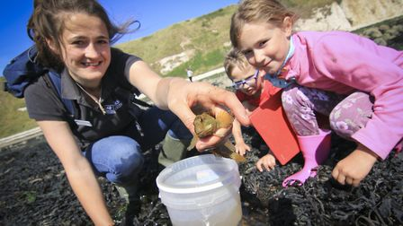Rockpooling at the Living Seas Centre