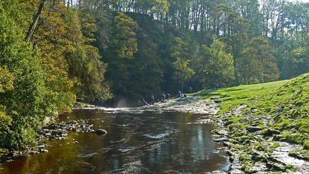 Salmon watching at Stainforth