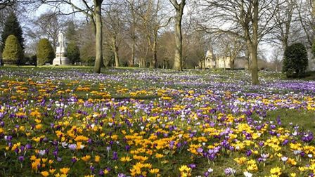Crocuses in Lister Park, Bradford with the statue of Samuel Lister by Gordon Ratcliffe