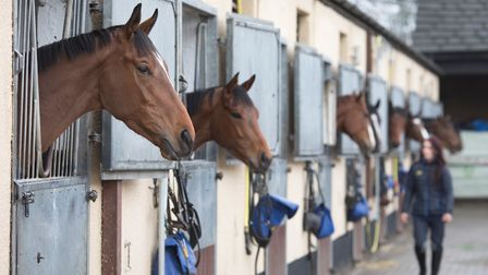Moakkad at Kingsley House Stables