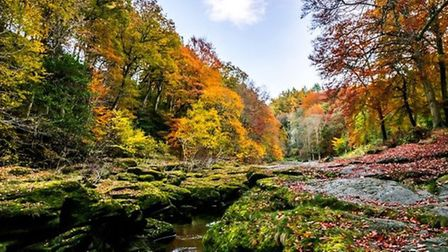 Autumn colours at the Strid, Bolton Abbey by Carolyn Bell