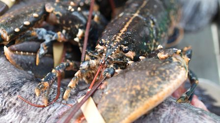 North Sea lobster with Scarborough woof (c) Andy Bulmer