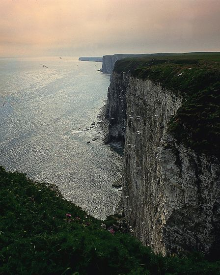 Part of Yorkshires spectacular coastline at Bempton Cliffs (c) Welcome to Yorkshire