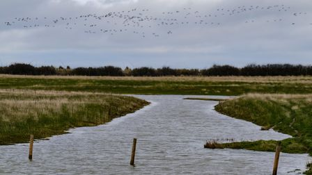 The view from one of the hides at Spurn Point